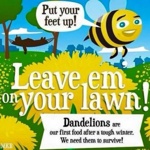 Leave Dandelions for the Bees