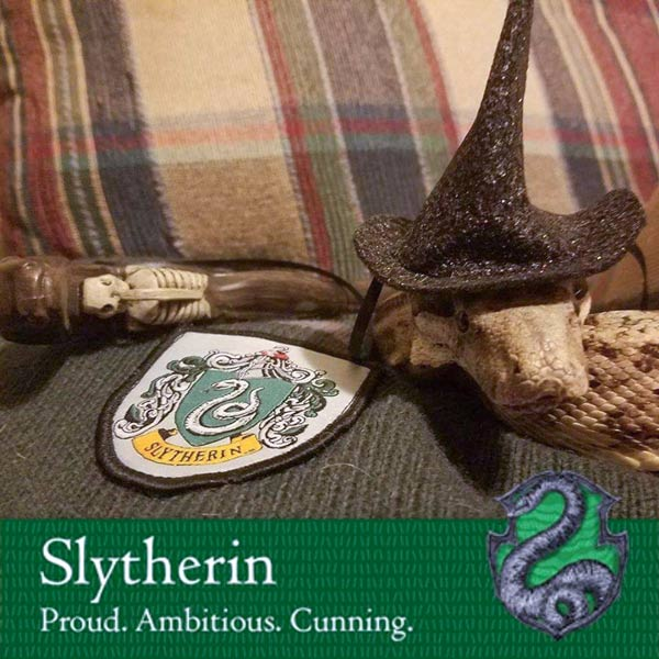 Salazar Slytherin - A Hog Island Boa